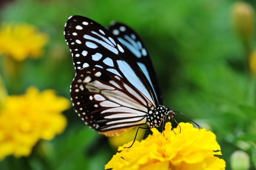 Fiori e farfalle china channel - Immagini di farfalle a colori ...